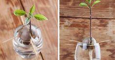 How to grow an avocado. You're welcome. - 9GAG