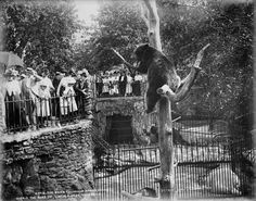 Lincoln Park Zoo, Chicago, Illinois- Bear Pit 1901