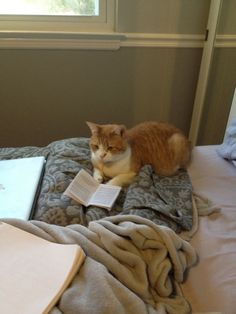 This is my baby Sally.  And yes, she is reading a book
