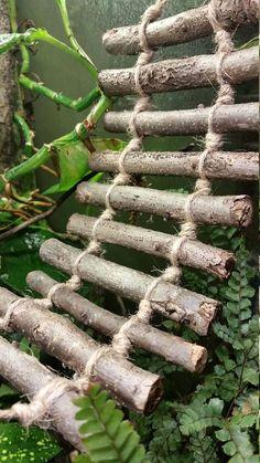 Medium walnut and jute climbing ladder for reptiles and hermit crab - Crested Gecko Habitat, Lizard Habitat, Reptile Habitat, Hermit Crab Tank, Hermit Crabs, Pet Turtle Care, Bartagamen Terrarium, Hermit Crab Habitat, Lizard Tank