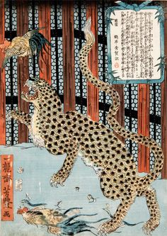 Ichiryusai (Utagawa) Yoshitoyo, Art Gallery of South Australia, Adelaide Japan Illustration, Tiger Illustration, Japanese Drawings, Japanese Prints, Ancient Japanese Art, Ancient Art, Art In The Age, Art Asiatique, Tiger Art