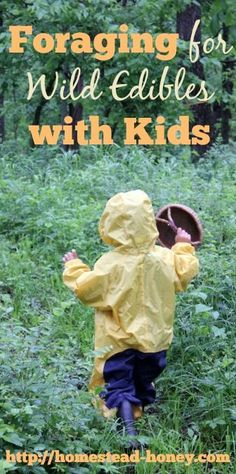 TIps for have a great experiences foraging for wild edibles with kids   Homestead Honey