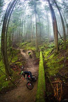 #bike park #trail