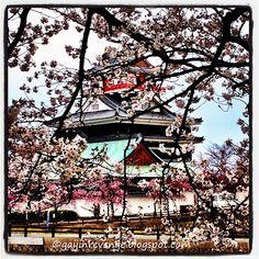 Kiyosu Castle and Sakura (Aichi)