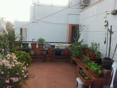 27 Best Terrace Gardeningindian Homes Images