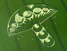 crop circle • mushroom pattern • mystic earth home