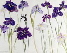 Elizabeth Blackadder Irises 2010 - still life quick heart Plant Illustration, Botanical Illustration, Natural Form Artists, Natural Forms, Still Life Artists, Deco Paint, Blackadder, High Art, Art Plastique