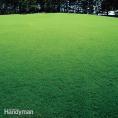 Cures for a Patchy Lawn Prepare your lawn and enjoy a lush lawn every spring