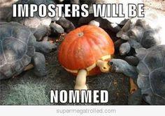 Funny Turtles Picture  #BVLGARI #cartier #gucci #hermes #pandora #Tiffanyco #linksoflondon