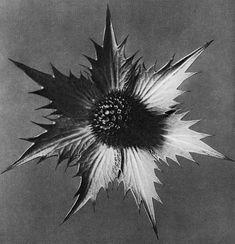 O alemão Karl Blossfeldt acreditava que a natureza tinha um importante papel no desenvolvimento da arte. Fotografou-a de uma maneira nunca antes experimentada. É no carácter óbvio de suas imagens que reside a inovação de Karl. Ele não somente introduziu uma técnica à fotografia, como inovou a maneira como se observa uma fotografia.