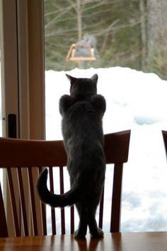 gatto in attesa della preda