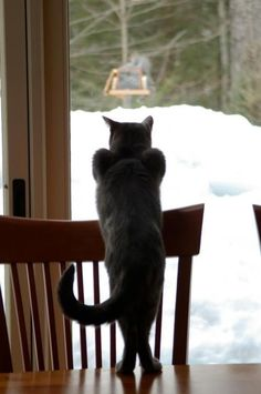 watching the bird feeder