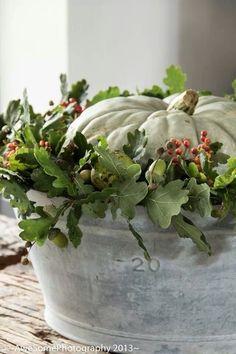 fall pumpkin display with plants
