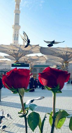 Muslim Images, Islamic Images, Islamic Pictures, Islamic Art, Mecca Masjid, Mecca Islam, Mecca Wallpaper, Islamic Quotes Wallpaper, Medina Mosque