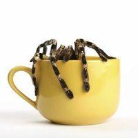 Ha eddig nem, akkor mostantól rettegni fogunk a pókoktól Bucket Bag, Blog, Blogging