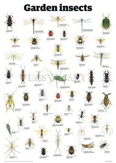 Garden Insect Identification Chart - If you know the right name of the insect, you can choose the right solution.