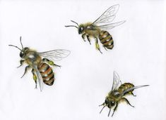 Perfect Honeybee sketches... they are searching for their flowers!