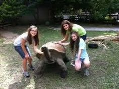 Backstage Pass: Aldabra Tortoises San Antonio, TX #Kids #Events