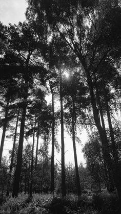 Black 'n' white. Edited using VSCO. West Midlands, Black N White, Vsco, Trail, Sunset, Landscape, Amazing, Nature, Outdoor
