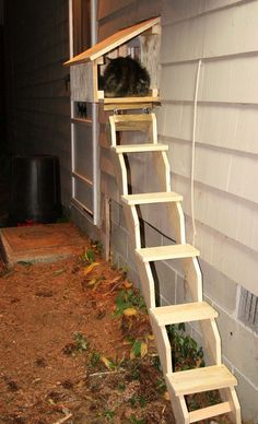 CAT -LADDERS,  Using a window opening during good weather. Consider this if we convert sun porch to a laundry-mud room.