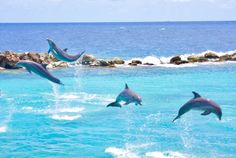 Must see, Dolphin Academy during your visit @ #villaBreezeCuracao