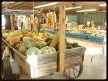 Lattin Farms, Fallon, Nevada. Produce farm stand and upick pumpkins. #farmstand #gopicking #fallonnevada