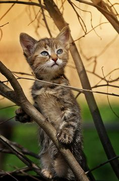 "art-and-dream: "" Animals photography cat wonderful style by Сергей Мироненко "" kittens cutest I Love Cats, Crazy Cats, Cool Cats, Fluffy Kittens, Cats And Kittens, Cute Small Animals, Funny Cat Photos, Curious Cat, Beautiful Cats"