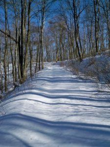 An entire trail of untouched snow near the top of HempTop Hill just south of Big Frog Mountain.