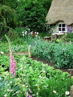 The cottage kitchen garden
