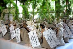 Seedling for Wedding Favor-