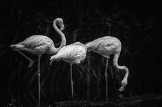Les plus beaux portraits d'animaux du National Geographic Nature Photographer of the Year 2016 National Geographic Photos, Photo Contest, Belle Photo, Pet Portraits, Beautiful Birds, Beautiful Creatures, Animals And Pets, Amazing Photography, Photo Galleries
