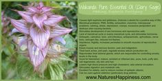 Clary Sage Essential Oil natureshappiness.com Clary Sage Essential Oil, 100 Pure Essential Oils, Essential Oil Blends, Spiritual Needs, Healthy Shopping, Natural Health Remedies, Fertility, Healing