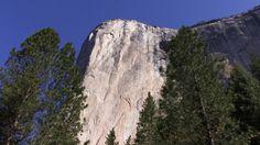 Forest 0104 Yosemite Stock Video https://vimeo.com/209550839