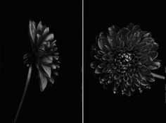 Black to Black Flowers – Fubiz™