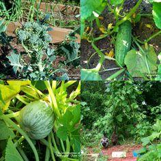 "The (mis)Adventures of a ""Born Again"" Farm Girl: Homestead Tips on Tuesday: Earth Friendly Gardening for Your Backyard"