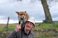 Este hombre rescató a tres espectaculares zorros y ahora ellos no quieren irse de su lado