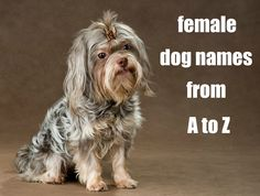 Cute female dog name ideas. Also there are male dog names on the site too!