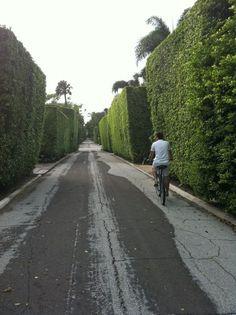 "Palm Beach Hedges #JetsetterCurator ""Style"" @Katharine LeCates"