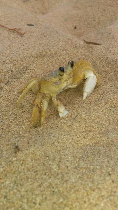 cangrejo-crab5