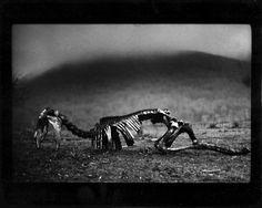 Giacomo Brunelli, The Animals