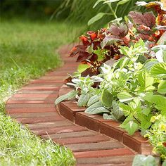 Paving and clay bricks provide a distinct edge between lawn and beds, with a raised row of bricks holding back a slightly raised bed. The type of lawn edging allows a lawn mower to pass right over the edge to keep lawns neat and tidy. http://www.easydiy.co.za/index.php/garden/379-easy-diy-ideas-for-beautiful-beds-and-borders