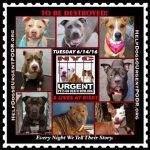 TO BE DESTROYED  06/14/16