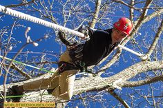 World Treehouses' Adam Laufer loves spending time in the trees. You could say he's branching out!