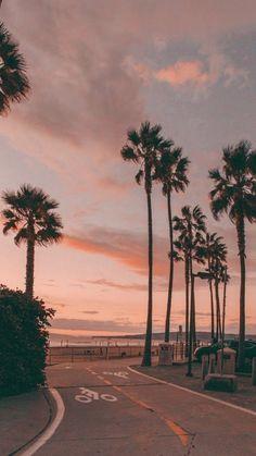 Street Palm Trees Wallpaper