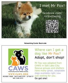 A calling card for my dog, Mr Fox. We get stopped everywhere we go, so this is a way for me to let people know about his page and to encourage rescue! He's a @Community Animal Welfare Society CAWS dog!