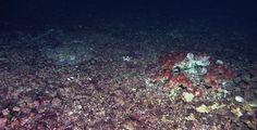Tuoreiden tutkimusten mukaan pienet muovinkappaleet haittaavat merten ravintoketjujen alkupäässä olevien matojen kasvua ja lisääntymistä. Lisäksi niihin voi kertyä muoveissa olevia myrkkyjä.