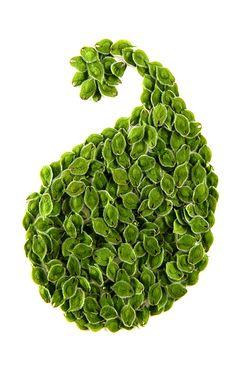 elm seeds (mary jo hoffman)