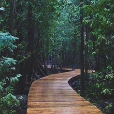 This Boardwalk Trail Takes You Through An Ancient Forest In Ontario Cyprus Lake Trail (south of Tobermory). This boardwalk trail takes you through an ancient forest in Ontario. Hiking Quebec, Places To Travel, Places To See, Voyage Canada, Ontario Travel, Canadian Travel, Secret Places, Wanderlust, Adventure Is Out There