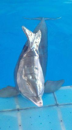 Panama the dolphin (Winter's friend)