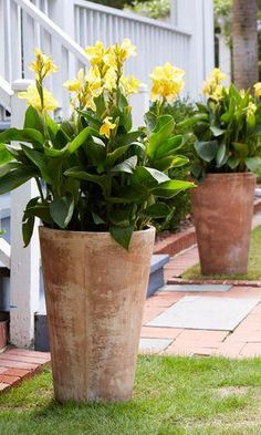 Container Gardening Ideas 10 Perennials That Add Colorful Style to Decks: Cannas look great in tall container gardens! Container Herb Garden, Garden Planters, Planter Pots, Container Flowers, Perrinial Garden, Full Sun Container Plants, Succulent Containers, Fall Planters, Herbs Garden